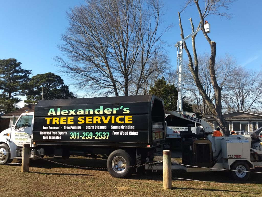 Tree Removal Southern Maryland Alexander S Tree Service
